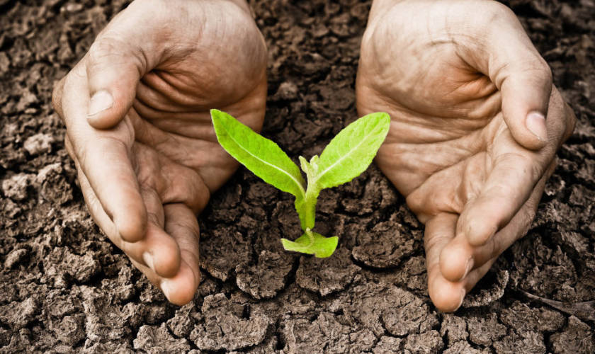 Foreste e deforestazione: a che punto siamo?